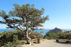 Kapchik przylądek w Novyi Svit miasteczku i drzewo, Crimea obrazy royalty free