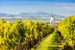 Kapel met wijngaard dichtbij Velke Bilovice royalty-vrije stock afbeeldingen