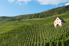 Kapell i vingård Arkivbilder