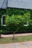 Kapelle mit grünen Bäumen stockbild