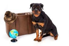 Kapelusz na walizce, kuli ziemskiej i rottweiler psie, Obrazy Stock