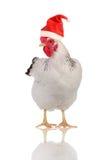 kapeluszowi kurni Santas Zdjęcie Royalty Free