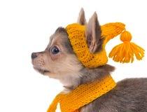 kapeluszowy portreta szczeniaka szalika kolor żółty Obrazy Stock