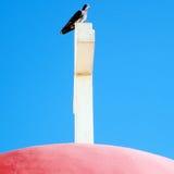 Kapernaum Dove on the cross October 2010 Stock Photography