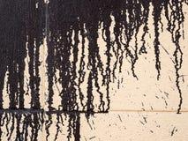 Kapiąca farba przy ścianą Obraz Stock
