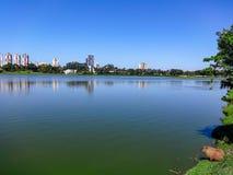 Kapibara obserwuje miasto odbijał w pięknym jeziorze fotografia royalty free