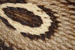 Kapiszon kobry i kobry skóry tekstury zbliżenie obrazy stock