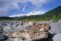 kapiszonu góry fiszorka drzewo obrazy stock