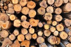 Kapitel des Kreisbauholzes stockfotos