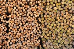Kapitel des Kreisbauholzes lizenzfreie stockfotos