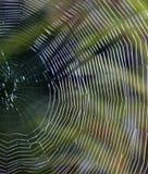 Kapitel des Webs Stockbild