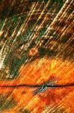 Kapitel eines Baums Stockfotos
