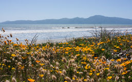 Kapiti Island. Raumati Beach, New Zealand Stock Photography