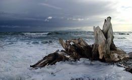 Kapiti Island Stormy. A wave breaking around driftwood on the Kapiti Coast, New Zealand Stock Photography