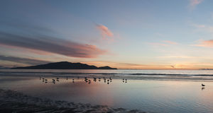 Kapiti sunset Royalty Free Stock Images