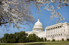 Kapitol-Gebäude im Washington DC USA im Frühjahr Stockbilder