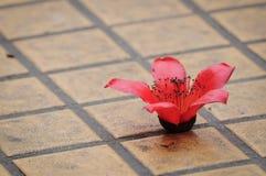 Kapok flower. S on the ground Stock Photos