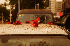 The kapok flowers in the top of the car Royalty Free Stock Photos