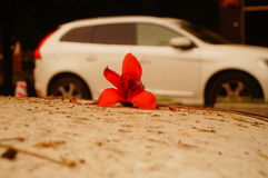The kapok flowers in the top of the car Royalty Free Stock Images