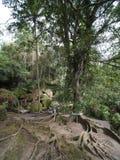 Kapok ou Ceiba près de temple bouddhiste chez Goa Gajah, Bali Photographie stock