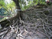 Kapok ou Ceiba près de temple bouddhiste chez Goa Gajah, Bali Images stock