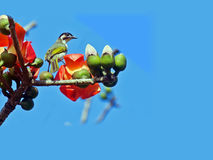 Kapok und die Vögel Lizenzfreie Stockfotografie