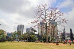 Kapoka drzewo w mieście obraz royalty free