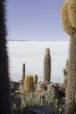 γιγαντιαίο άλας ερήμων κά&kappa Στοκ Φωτογραφίες