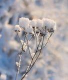 Kappen van sneeuw Royalty-vrije Stock Afbeelding