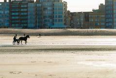 Kapplöpningshästutbildning på stranden Arkivfoto