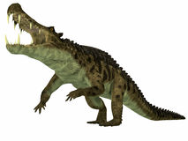Kaprosuchus over White. Kaprosuchus was a marine reptile that lived in rivers and swamps of the Cretaceous Period Stock Photos