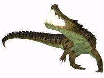 Kaprosuchus på vit Arkivfoto
