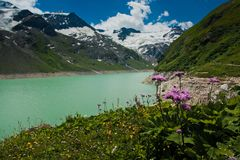Kaprun area, lake, flowers and Alps Stock Image