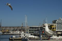 Kapstadt-v&A Wasserfront Stockfotos
