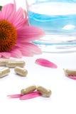 kapsułki echinacea Obraz Royalty Free