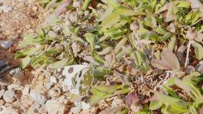 Kapuścianego bielu motyl 3 fotografia royalty free