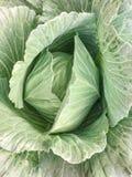 Kapuściani warzywa r zdjęcia stock