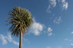 kapuściany drzewo zdjęcia stock