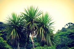 Kapuściany drzewo Zdjęcia Royalty Free