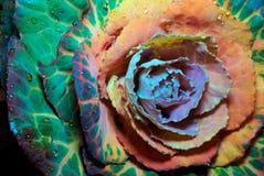 Kapuściany kwiat Obrazy Stock