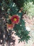 Kapuru fotografia royalty free
