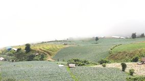 Kapusty mgła i pole zbiory wideo