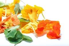 Kapuzinerkäse-Blume essbar Stockbild