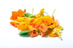 Kapuzinerkäse-Blume essbar Lizenzfreie Stockbilder
