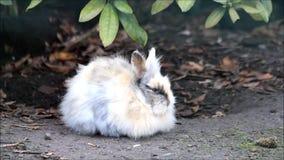 karłowaty królik outside, Easter zdjęcie wideo