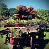 Kar met vele potten van bloemen in de weide in bergenwi Royalty-vrije Stock Fotografie