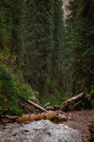 Karacol berg, flod, träd, sommar arkivbilder