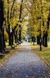 Karadjordjev park. Autumn in one of Belgrade's park with wonder full leaves Stock Photography