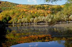 Karagöl in autumn. Lake Karagöl in Ankara/Turkey in autumn Royalty Free Stock Image