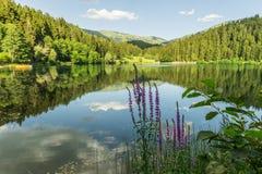 Karagol (Black Lake), Artvin Royalty Free Stock Photo